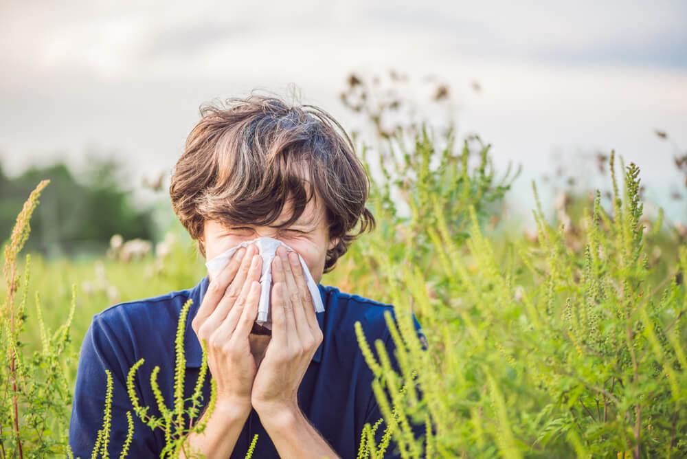 Alergija na ambroziju